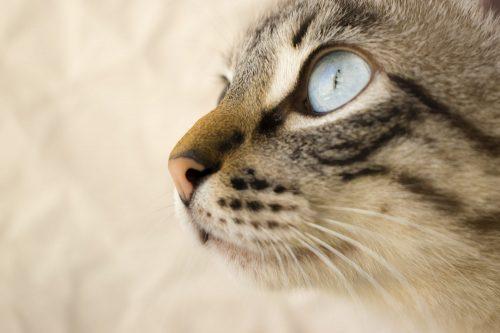 fear free waarnemend dierenarts waarneming waarnemer gedragstherapie gedragskundige katten konijnen kat konijn geaccrediteerd verzekering accreditatie certipet