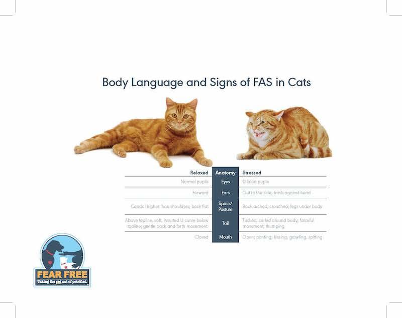lichaamstaal angst kat