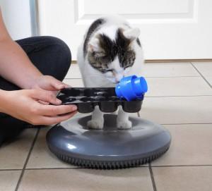 hersenwerrk voor katten, kat puzzelt