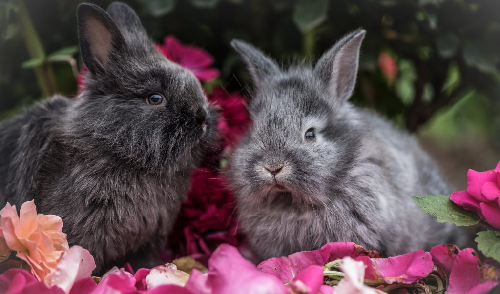 twee konijnen