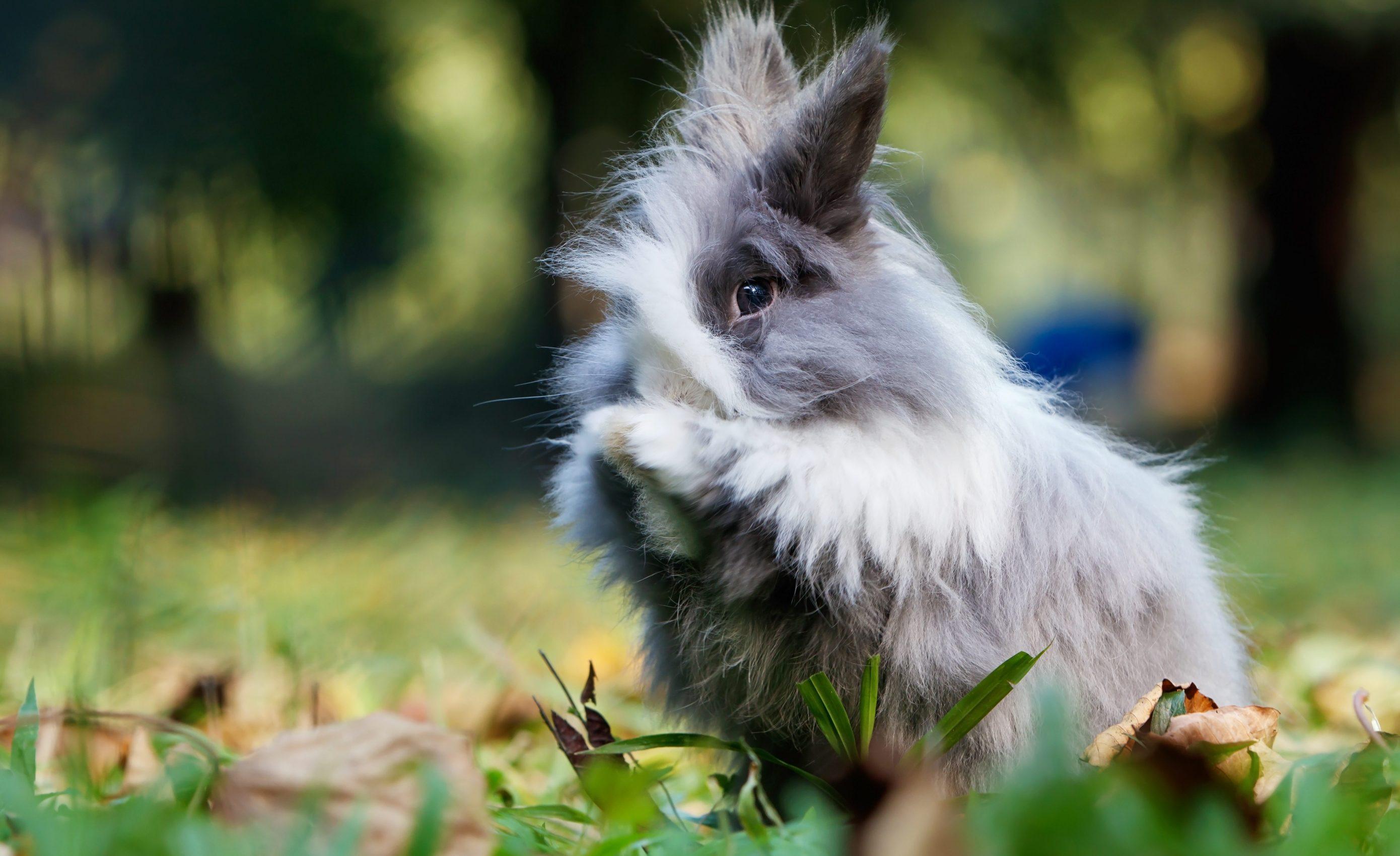 konijn wast zich