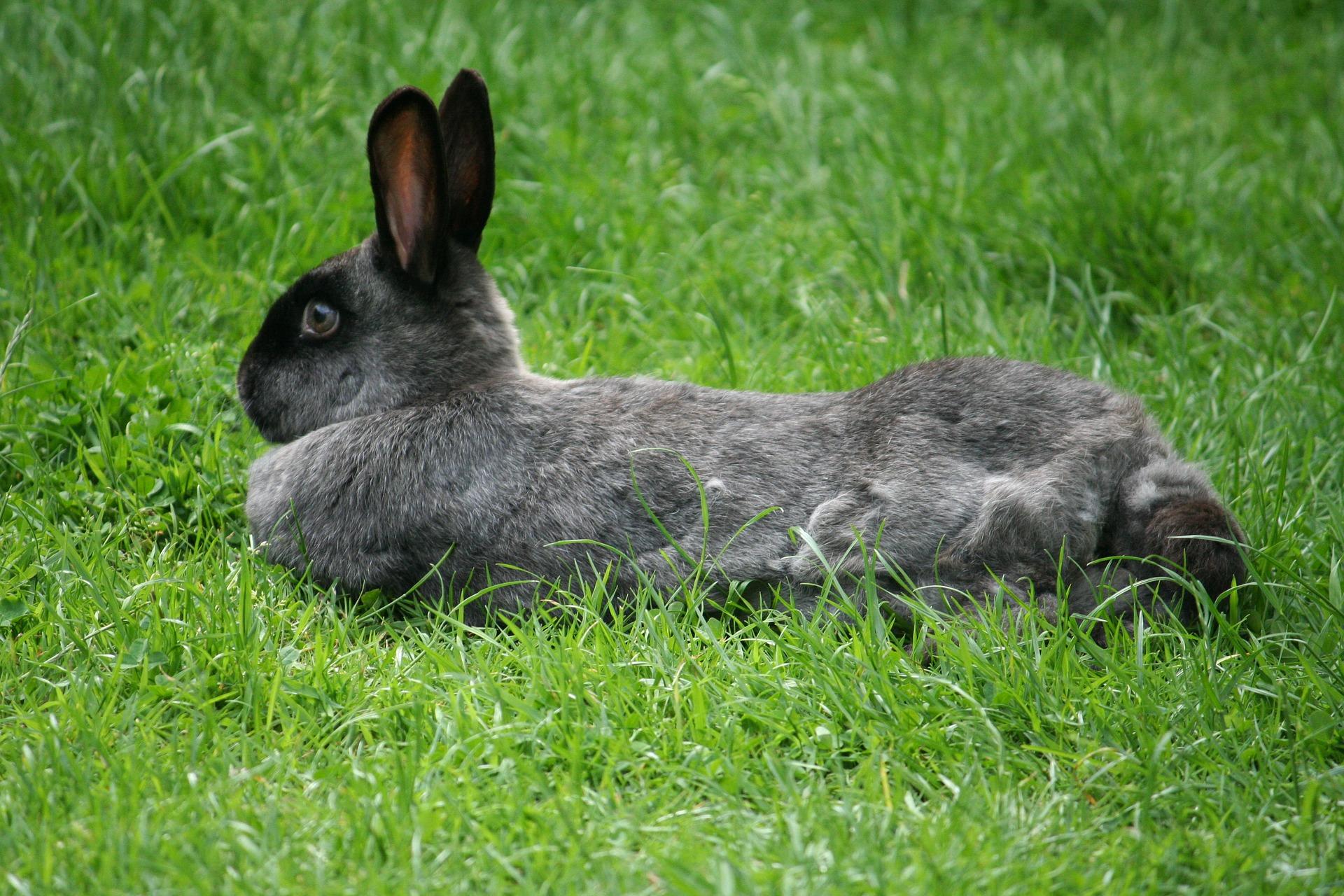 konijn ligt op gras