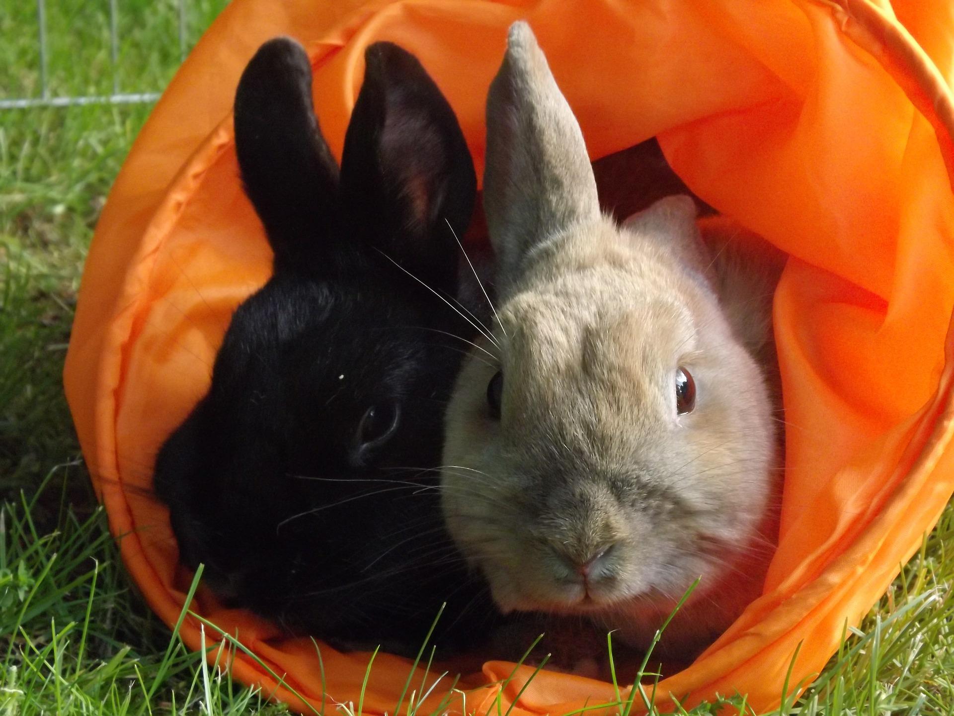 konijnen samen in speeltunnel